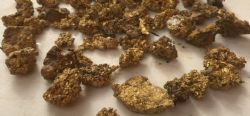 Some gold nuggets recovered the last week of August