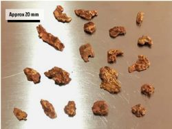 Gold nuggets recovered from the area south of the 'Royal Harry' workings.
