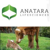 Anatara Lifesciences (ASX:ANR)