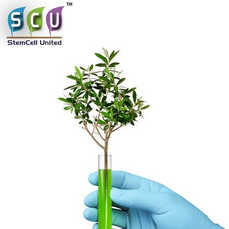 SCU Appoints Nevil Schoenmakers as Strategic Advisor to Pursue Opportunities in Medicinal Cannabis Sector