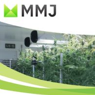 MMJ PhytoTech Ltd (ASX:MMJ) United Greeneries MOU to Supply Recreational Cannabis