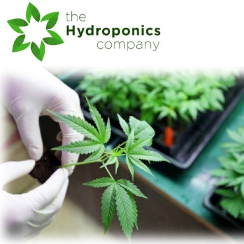 Canadian Hydroponics Division and Restatement of Objectives