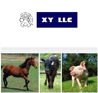 XY LLC