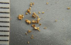 Gold panned from ~3kg air core sample from 16-17m in TGGAC181