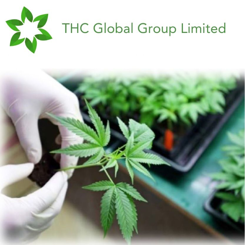 THC Global Hydroponic Equipment Operations Update