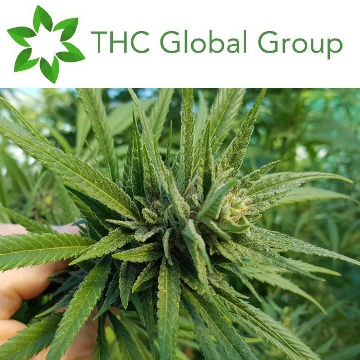 THC Global Quarterly Update & Appendix 4C